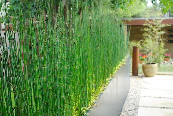 Plantas que nos pueden ayudar en el dise o del jard n - Plantas de jardin exterior ...