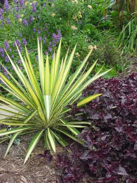 Plantas que nos pueden ayudar en el dise o del jard n for Plantas de hojas perennes para jardin