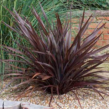 Plantas para diseñar el jardín 3