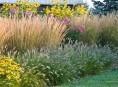 imagen Plantas que nos pueden ayudar en el diseño del jardín