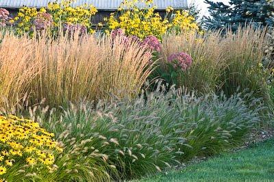 Plantas para diseñar el jardín 5