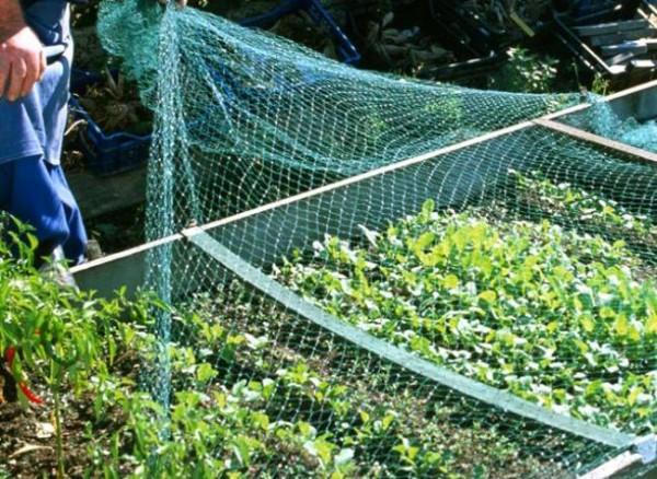 Protección de cultivos con medios físicos 1