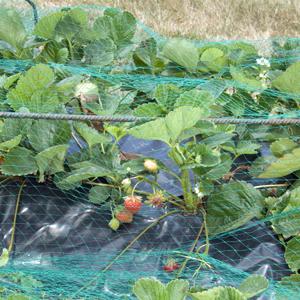 Protección de cultivos con medios físicos 3