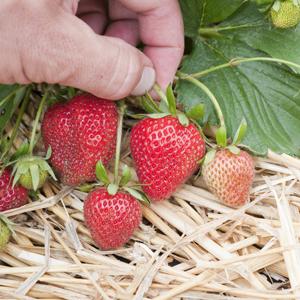 Protección de cultivos con medios físicos 6