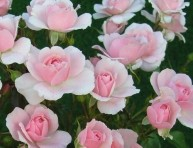 imagen Los rosales modernos
