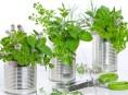 imagen 14 plantas para cultivo medicinal – Parte I
