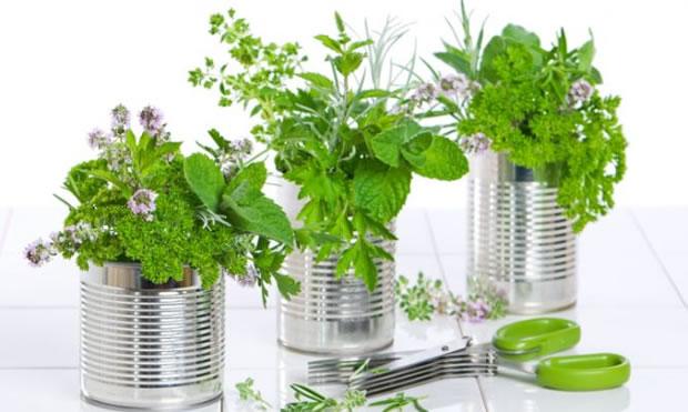 14 plantas para cultivo medicinal - Parte I