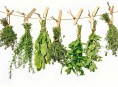 imagen 14 plantas para cultivo medicinal – Parte II