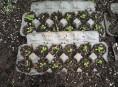 imagen Cultivo de hojas verdes en cartones de huevo