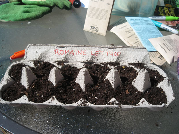 Cultivar en cartones de huevos 3