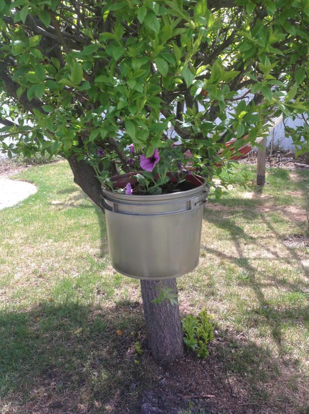 Cultivo invertido de tomate en una cubeta pl stica for Cultivo de arboles frutales en macetas