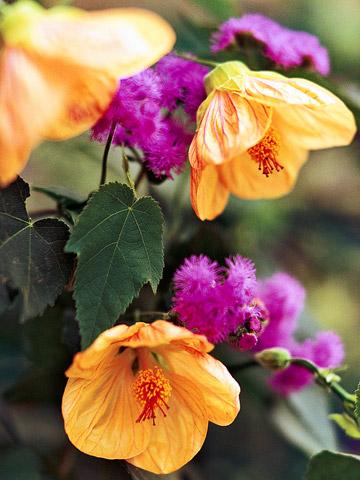 Flores tropicales para tu jardín 1