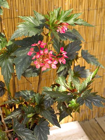 Flores tropicales para tu jardín 2