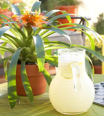 Flores tropicales para tu jardín 3