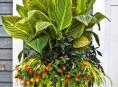 imagen Las mejores flores tropicales para tu patio