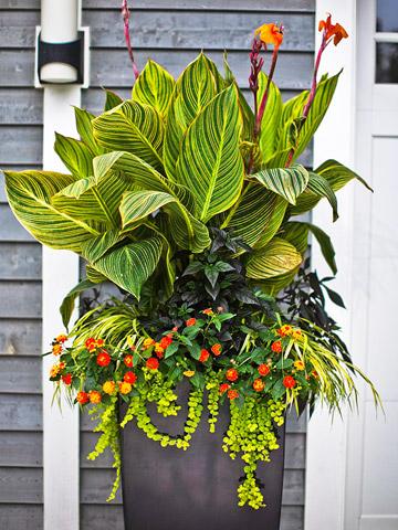 Flores tropicales para tu jardín 5