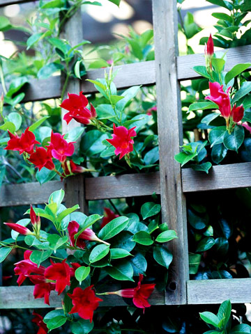 Flores tropicales para tu jardín 8