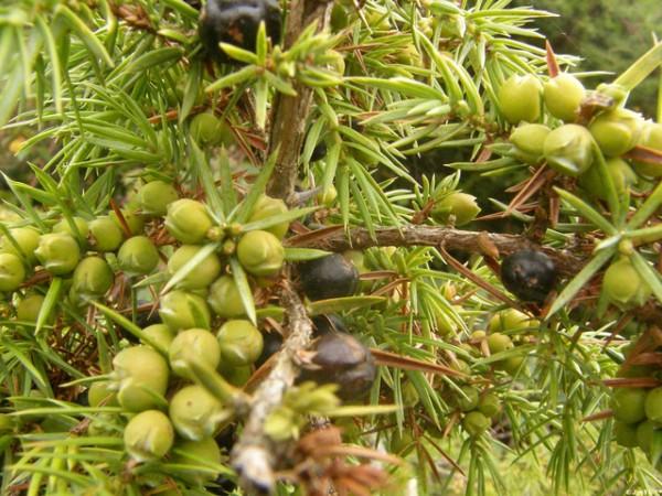 Por qué hay plantas que son aromáticas 4