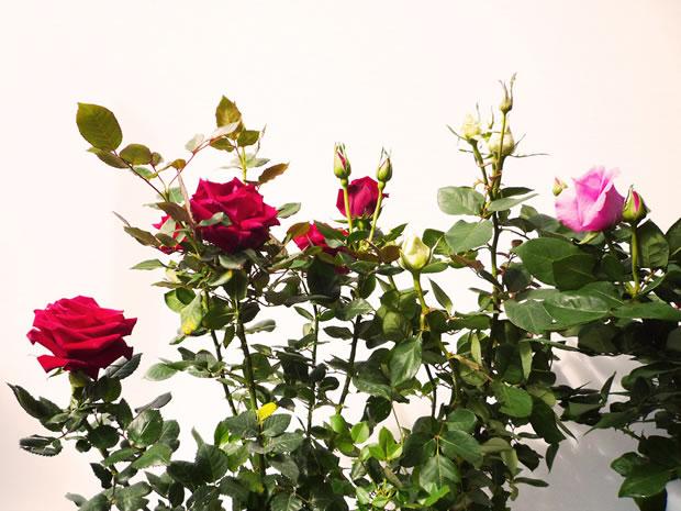 Rosales 2