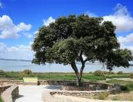 imagen Acebuche: un olivo silvestre
