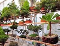 imagen Vegetación para bonsáis: maleza a ras de suelo