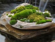 imagen Cómo hacer crecer musgo en tu jardín