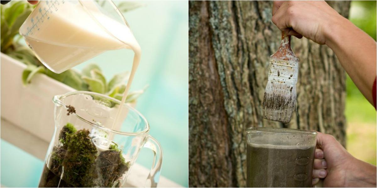 Cómo hacer crecer musgo en tu jardín