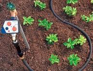 imagen Consejos para el correcto riego de tus plantas