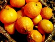 imagen Árboles frutales: Mandarino