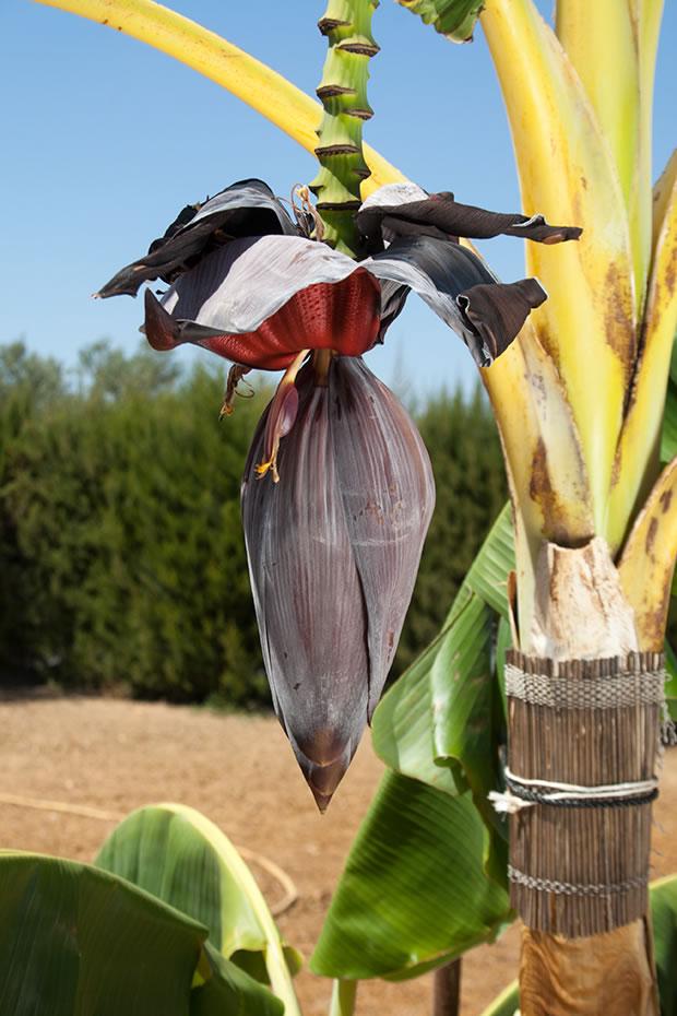 guia-jardineria-2014-08-31-67
