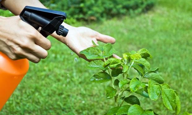 Insecticida casero de ajo y menta for Beneficios del insecticida casa jardin