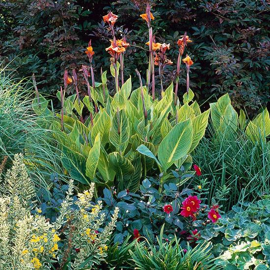 Plantas para el calor 6