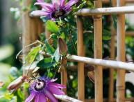 imagen Plantas para veranos muy calurosos