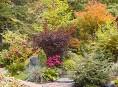 imagen Tips para planificar un jardín otoñal