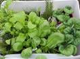 imagen 8 verduras de otoño para cultivar en jardinera