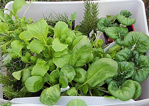 8-verduras-de-otono-para-cultivar-en-jardinera-01