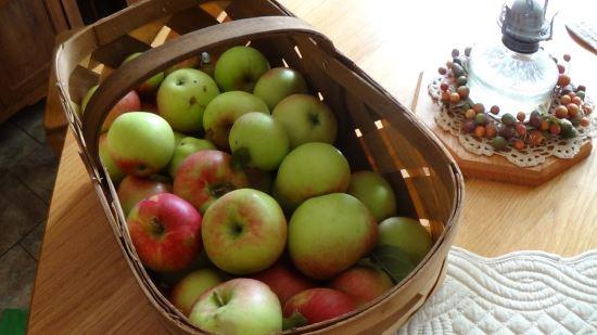 Herramienta DIY para recolectar frutas 1