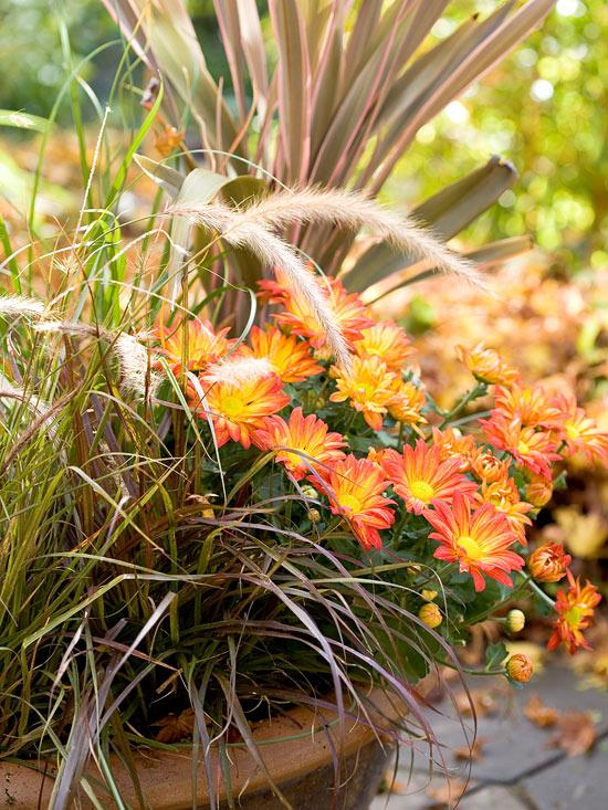 Jardín de otoño 7
