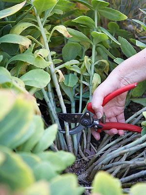 Cultivo y cuidado de las suculentas 3