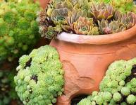 imagen Guía para el cultivo y cuidado de las suculentas