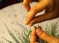imagen El pinzado en el bonsái