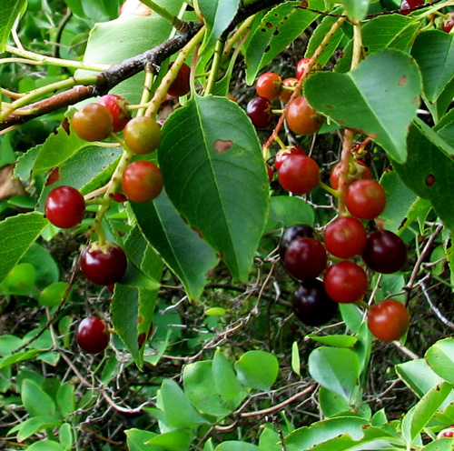 5 1 rboles frutales de r pido crecimiento for Arboles perennes de crecimiento rapido