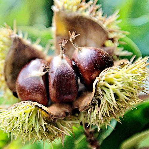 5 1 rboles frutales de r pido crecimiento for Tipos de viveros frutales
