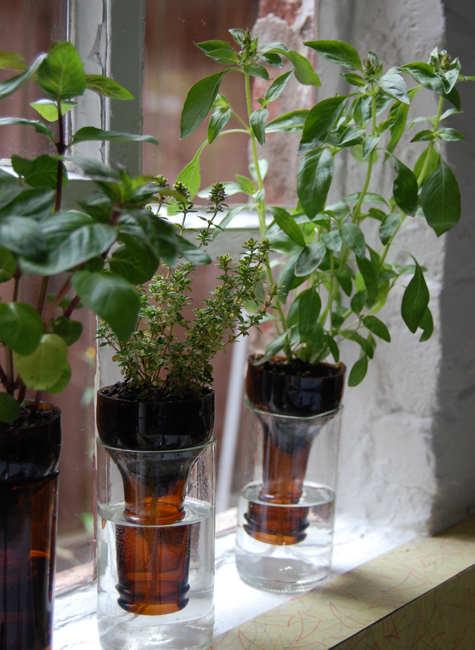 Cómo hacer hidrojardineras con botellas de cristal | Guía de Jardinería