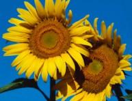 imagen 10 cultivos para mejorar tu estado de ánimo