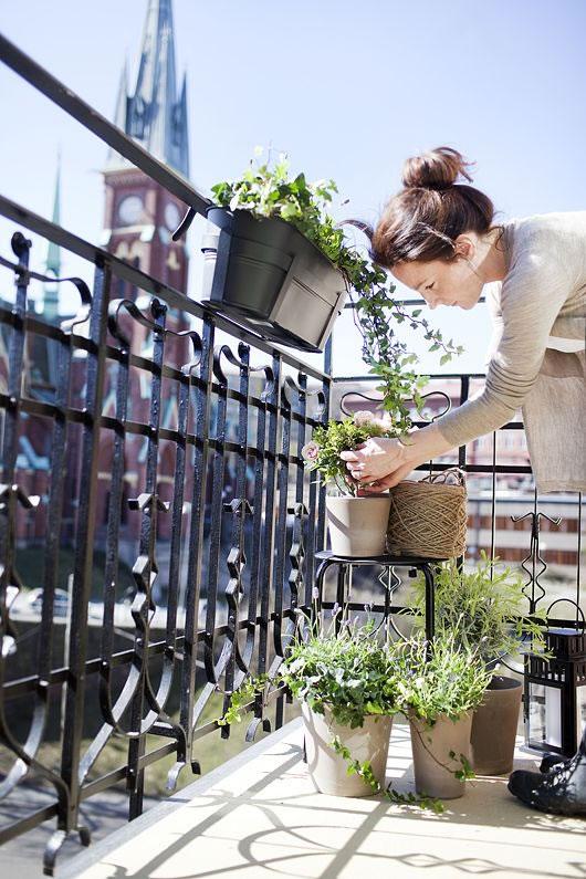 Cultiva en el balcón 1