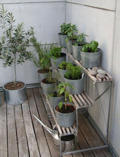 Cultiva en el balcón 2