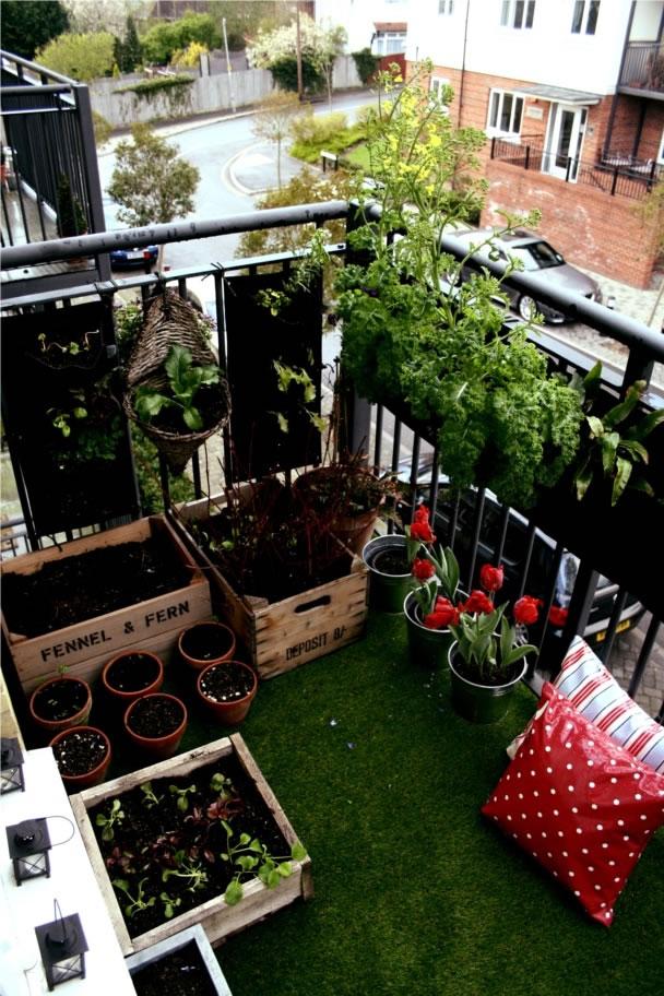 Cultiva en el balcón 4