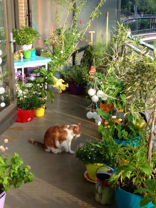 Cultiva en el balcón 5