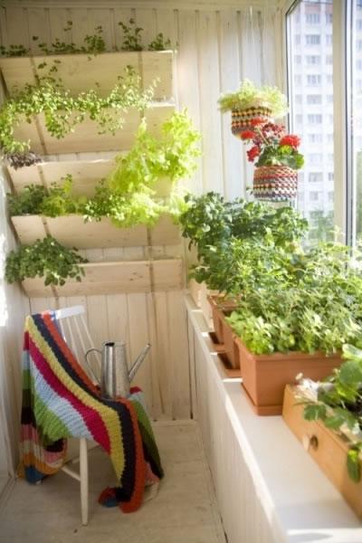 Cultiva en el balcón 7